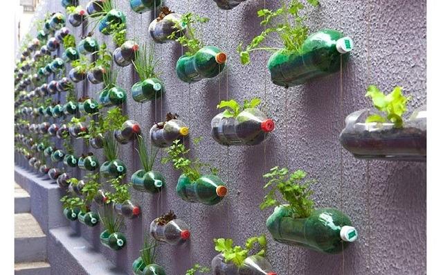 Tái chế chai nhựa thành lọ trồng rau